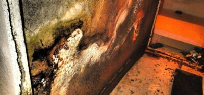 Mold Damage. This is why you need mold removal and restoration.